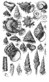 Conchological Manual Plate 16.png