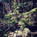 Cooper park walk Sydney.jpg