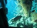 Coral World Underwater Observatory 30.jpg