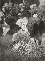 Corals, Kami Memperkenalkan Maluku dan Irian Barat, p59.jpg