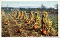 Corn and Pumpkins, When the forst is on the Pumplin and the fodder in the shock (NBY 10102).jpg