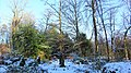 Coronation Garden in winter, Spiers School, Beith, North Ayrshire.jpg