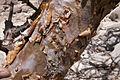 Corteccia-Boswellia.jpg