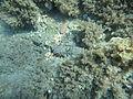 Costa Cabo de Gata 07.JPG