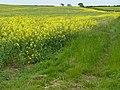 Costock fields - geograph.org.uk - 1331608.jpg