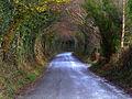 Country Lane at Cumeen - geograph.org.uk - 756380.jpg