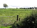 Coyagh Glebe - geograph.org.uk - 1457948.jpg