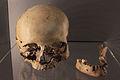 Cráneo Cova del Parpalló.JPG