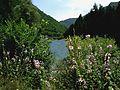 Crni Drim River 85.JPG