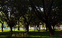 Cubbon Park W.jpg