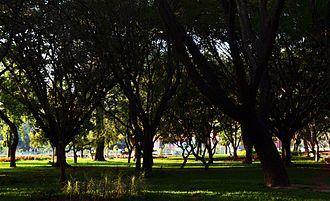 Cubbon Park - Image: Cubbon Park W