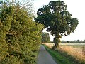 Cuffer Lane, New Buckenham - geograph.org.uk - 223604.jpg