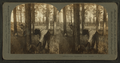 Cutters at Turpentine Farm, Georgia, from Robert N. Dennis collection of stereoscopic views.png