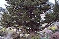 Cypress1(js).jpg