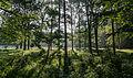 Dülmen, Naturschutzgebiet -Am Enteborn- -- 2014 -- 0201.jpg