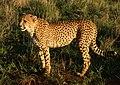 DSC01458 - NAMIBIA 2010 (31440957226).jpg