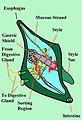 DT's phytoplankton.jpg