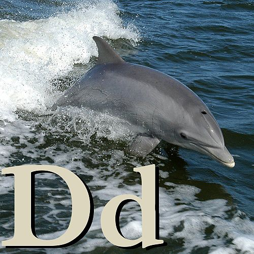 D is for Dolphin.jpg
