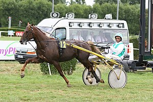 Overcheck - An overcheck used on a harness racing horse.