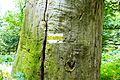 Debno natural reserve (gm. Rawicz) (8).JPG