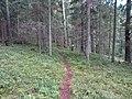 Degučių sen., Lithuania - panoramio (196).jpg