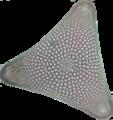 Diatom 4.png