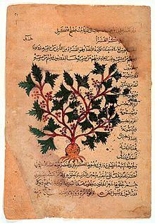 El concepto de herbario durante la Edad Media editar  fed00254340
