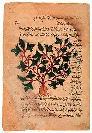 Medieval medicine of Western Europe - Dioscoridis: De materia medica