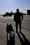 Dogs defend Bagram 121201-F-LR266-744.jpg