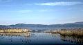 Dojran Lake 215.jpg