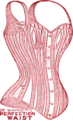 Dr Warner's PERFECTION WAIST.png