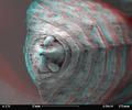 Dragonfly larva skin SEM stereo 15x b.png
