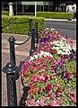 Dubbo City Area-49and (3166214126).jpg