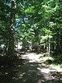 Dunn's Woods pathway eastward.jpg
