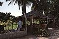 Dunst Oman scan0327 - Früchte - Anbau.jpg