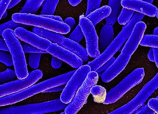 Živé prírodniny - baktérie