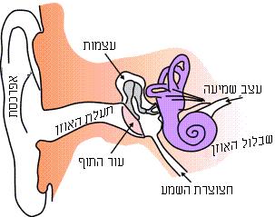 Ear-anatomy-text-small