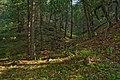 East Canyon - Flickr - aspidoscelis (4).jpg