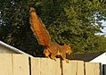 Eastern Fox Squirrel 4.jpg