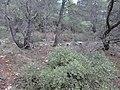 Ekali, Greece - panoramio (5).jpg