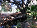 El Dorado Hills Trail 31 - panoramio.jpg