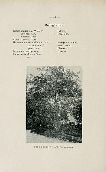 File:El Jardín botánico de Buenos Aires (Page 48) BHL16635358.jpg