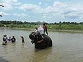 Elephant in Chitwan.jpg