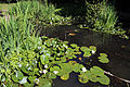 Epping Forest Visitor Centre High Beech Essex England ~ pond 01.JPG