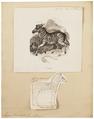 Equus burchellii - 1700-1880 - Print - Iconographia Zoologica - Special Collections University of Amsterdam - UBA01 IZ21700009.tif