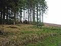 Esp Hill, Wark Forest - geograph.org.uk - 212651.jpg