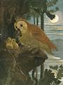 Evans owls.png