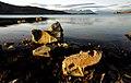 Evening at Lake Tekapo. (9) (8432248278).jpg