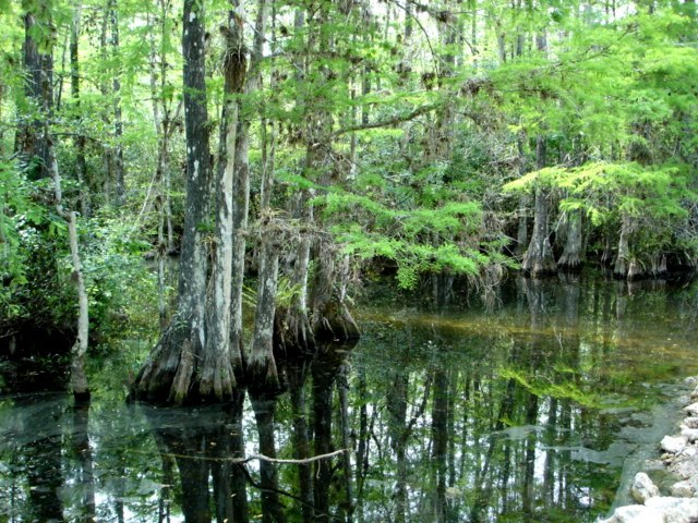 Everglades Park swamp