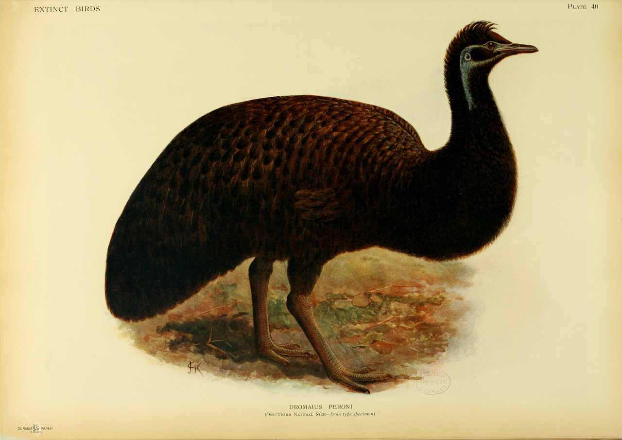 list of extinct animals of australia - wikiwand